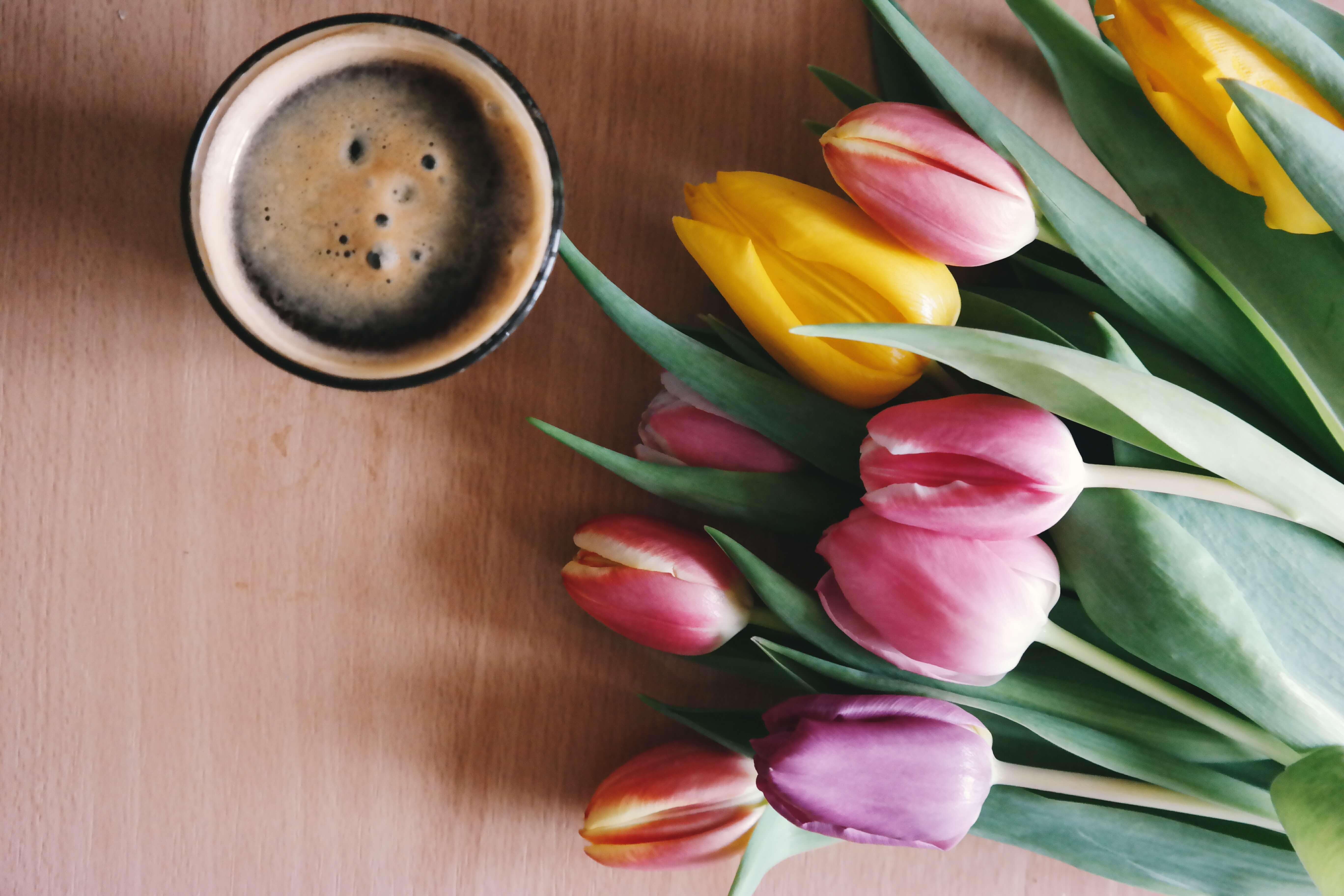 Tulip favourite flower